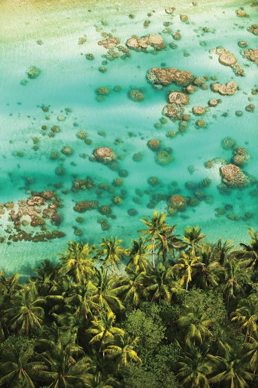 THE BRANDO SEA