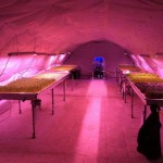 Growing Underground - Londra