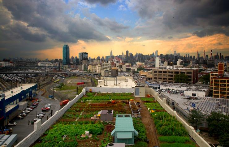 brooklyn-grange-orto-urbano-new-york-queens