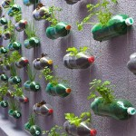 Bottiglie riciclate come vasi