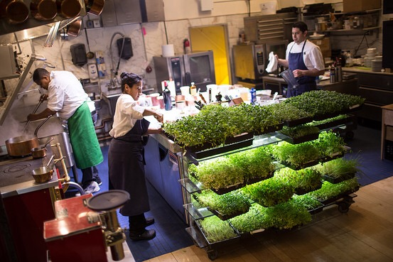 Bouley Botanical: green house laboratorio e restaurant